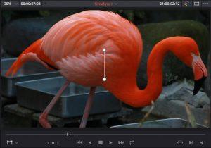 DaVinci Resolve:トランスフォームで拡大した動画。
