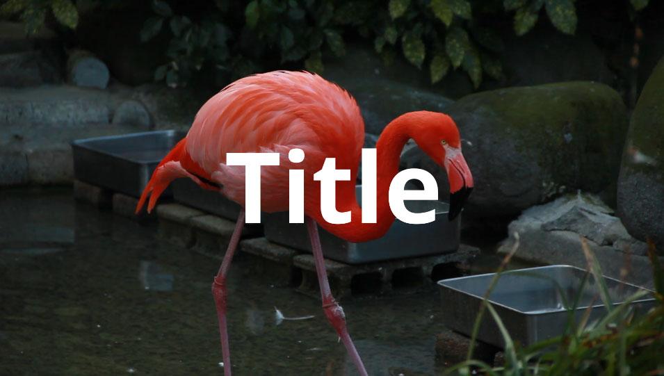 Text+の表示例